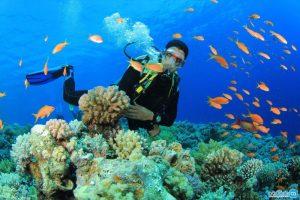 خروج مرجان و صدف از کیش ۶۰ میلیون ریال جریمه دارد