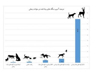 تهاجم سگها و گربههای رها به محیط زیست