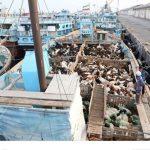توقیف و کشف احشام قاچاق در آبهای مرزی کیش